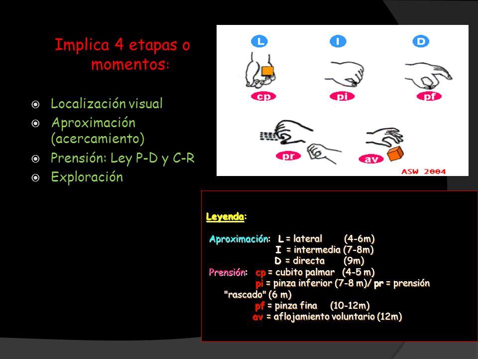 Implica 4 etapas o momentos : Localización visual Aproximación (acercamiento) Prensión: Ley P-D y C-R Exploración Leyenda: Aproximación: L = lateral (