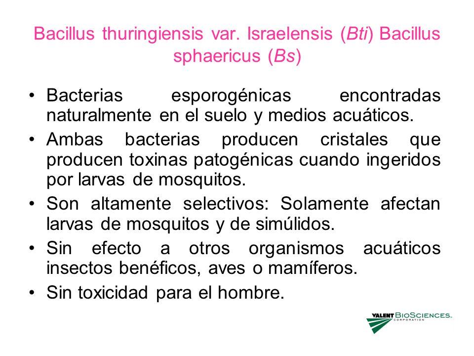 Bacillus thuringiensis var. Israelensis (Bti) Bacillus sphaericus (Bs) Bacterias esporogénicas encontradas naturalmente en el suelo y medios acuáticos