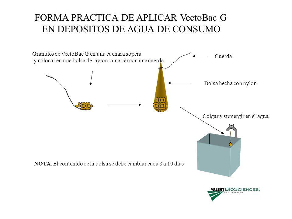 FORMA PRACTICA DE APLICAR VectoBac G EN DEPOSITOS DE AGUA DE CONSUMO Granulos de VectoBac G en una cuchara sopera y colocar en una bolsa de nylon, ama