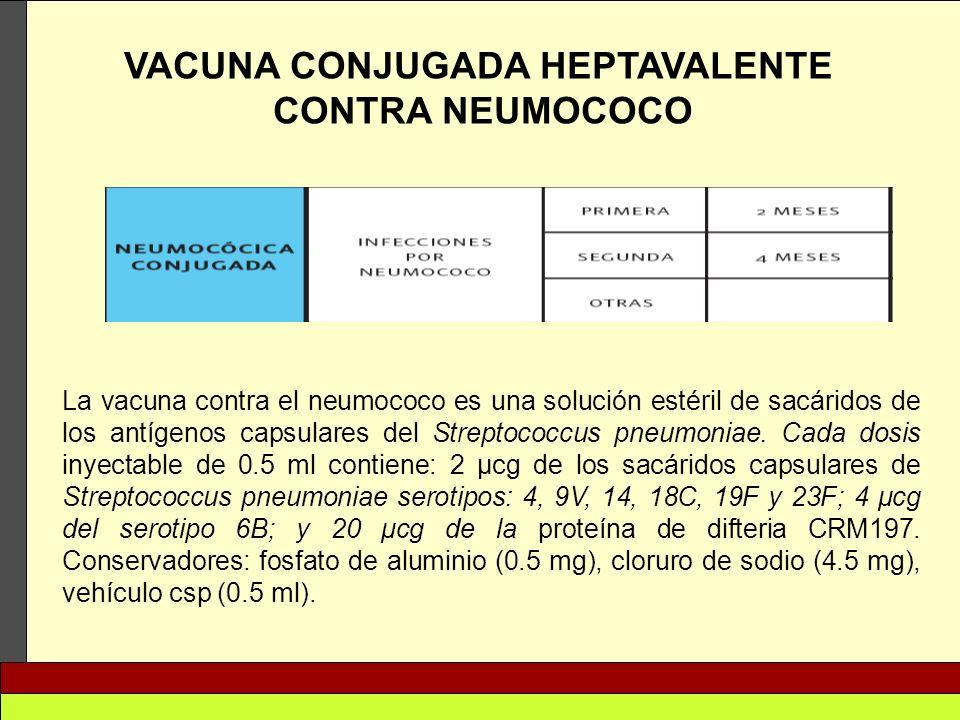VACUNA CONJUGADA HEPTAVALENTE CONTRA NEUMOCOCO La vacuna contra el neumococo es una solución estéril de sacáridos de los antígenos capsulares del Stre
