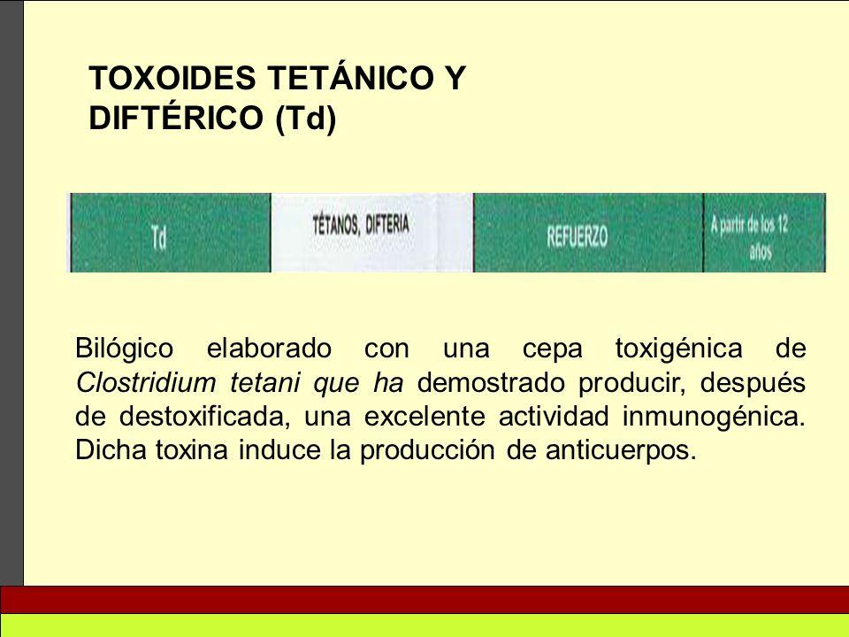TOXOIDES TETÁNICO Y DIFTÉRICO (Td) Bilógico elaborado con una cepa toxigénica de Clostridium tetani que ha demostrado producir, después de destoxifica