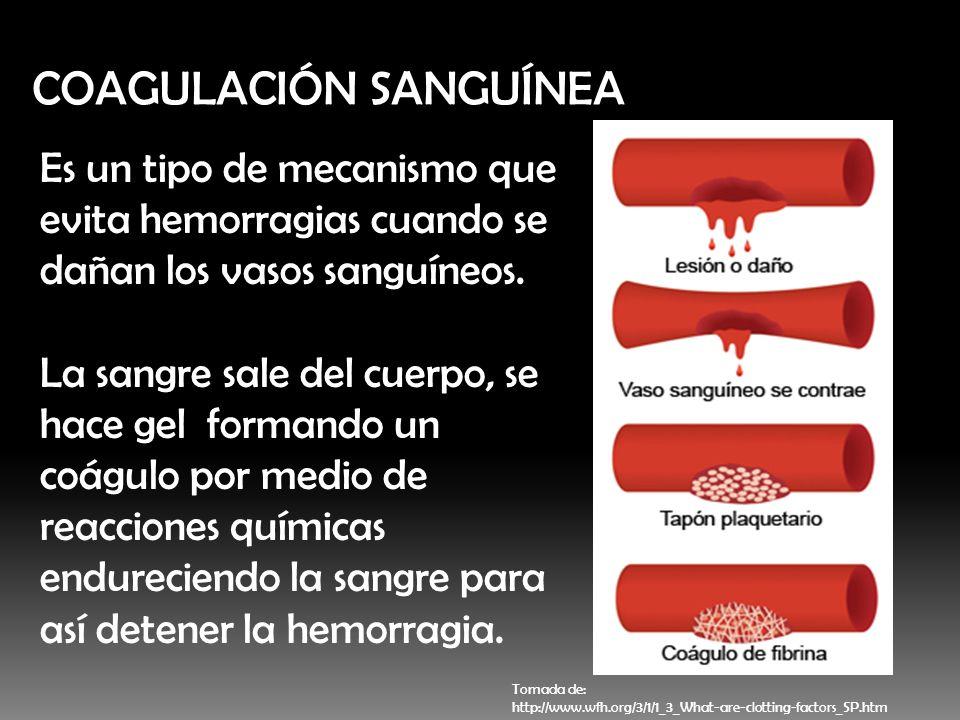 COAGULACIÓN SANGUÍNEA Es un tipo de mecanismo que evita hemorragias cuando se dañan los vasos sanguíneos. La sangre sale del cuerpo, se hace gel forma