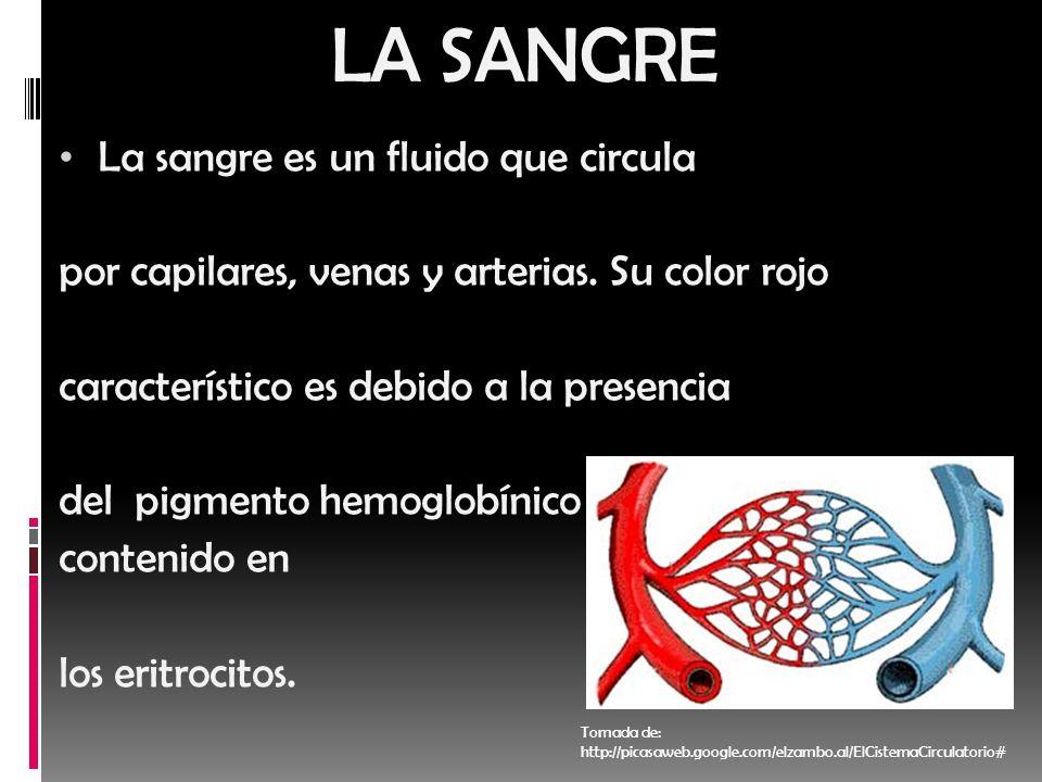 LA SANGRE La sangre es un fluido que circula por capilares, venas y arterias. Su color rojo característico es debido a la presencia del pigmento hemog