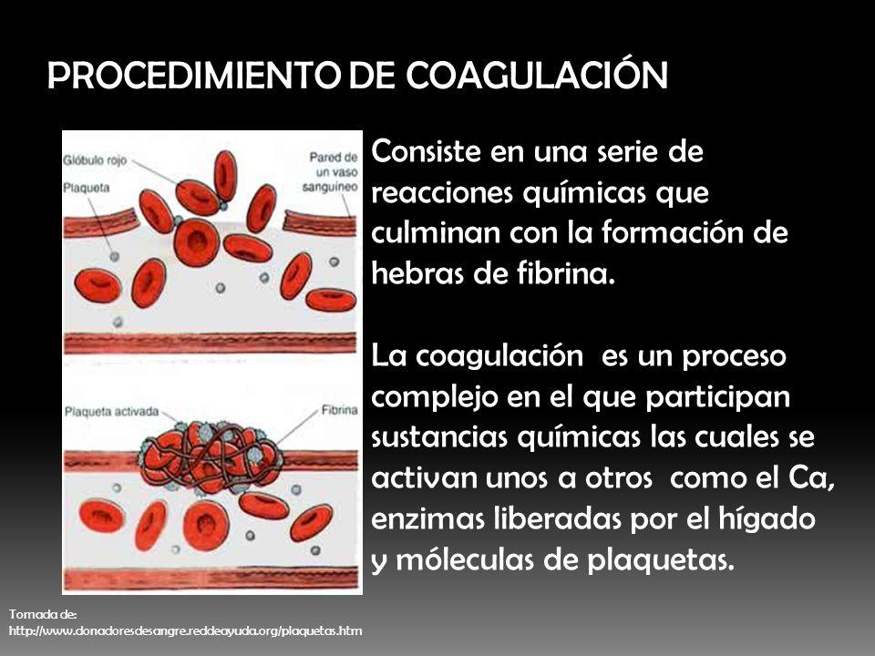 PROCEDIMIENTO DE COAGULACIÓN Consiste en una serie de reacciones químicas que culminan con la formación de hebras de fibrina. La coagulación es un pro