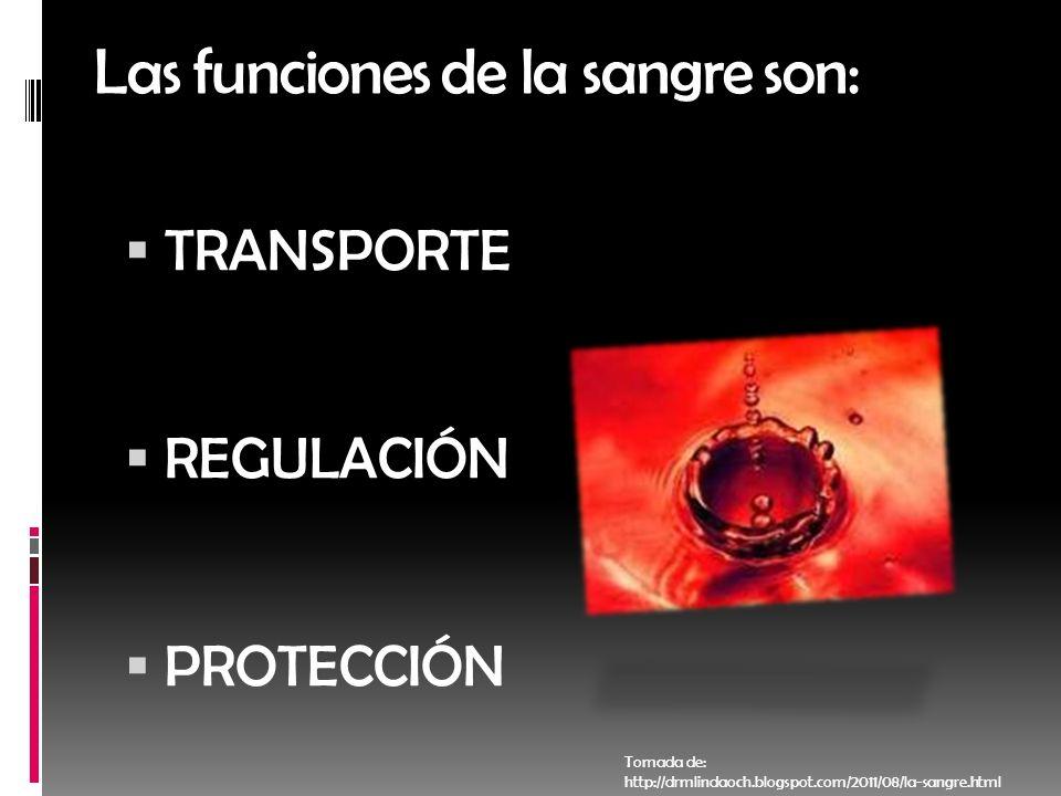 Las funciones de la sangre son: TRANSPORTE REGULACIÓN PROTECCIÓN Tomada de: http://drmlindaoch.blogspot.com/2011/08/la-sangre.html