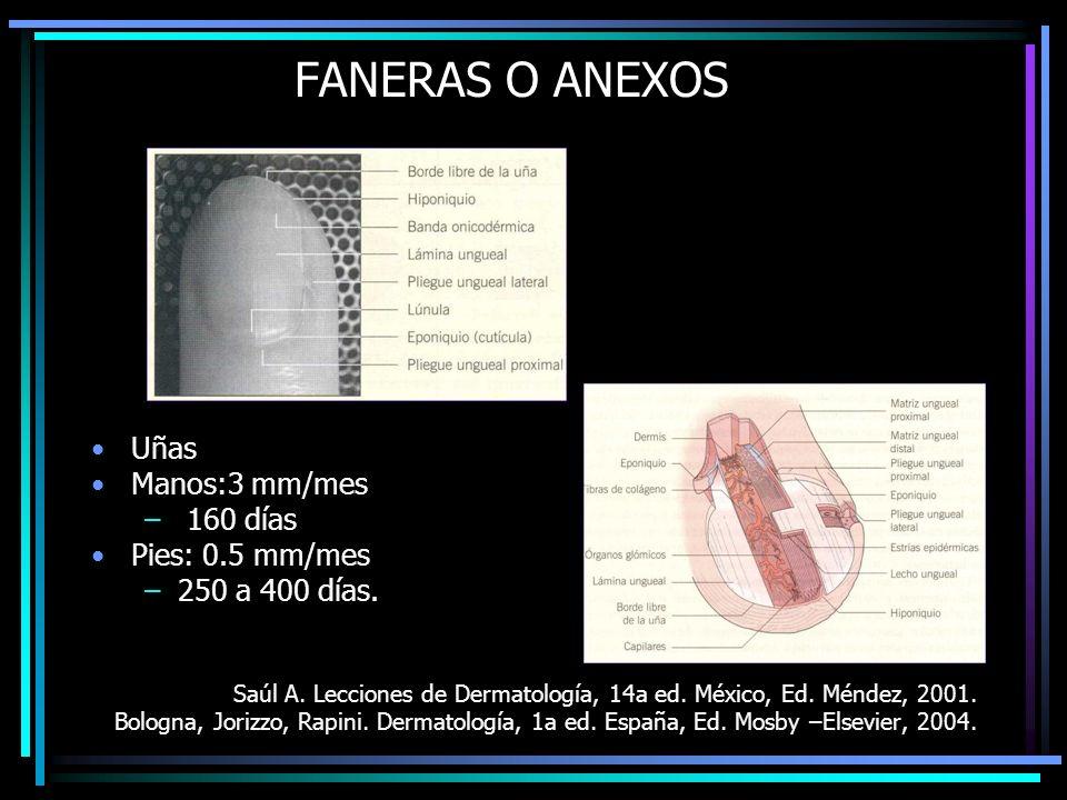 FANERAS O ANEXOS Uñas Manos:3 mm/mes – 160 días Pies: 0.5 mm/mes –250 a 400 días. Saúl A. Lecciones de Dermatología, 14a ed. México, Ed. Méndez, 2001.