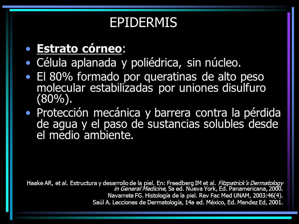 EPIDERMIS Estrato córneo: Célula aplanada y poliédrica, sin núcleo. El 80% formado por queratinas de alto peso molecular estabilizadas por uniones dis