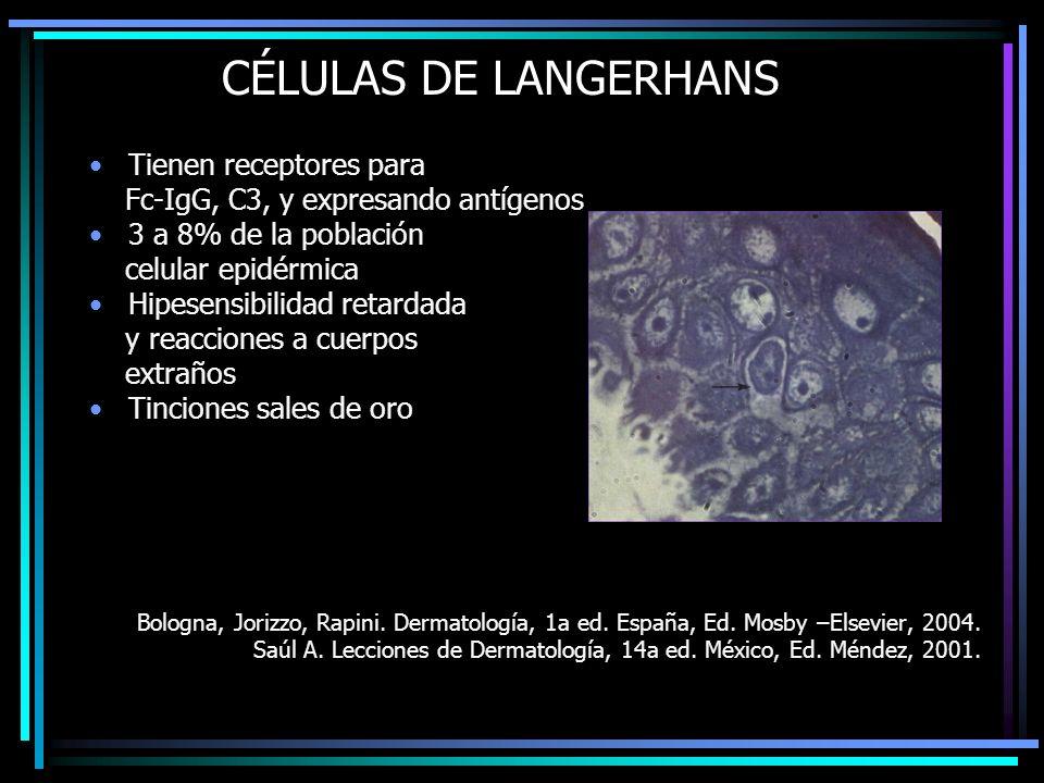 CÉLULAS DE LANGERHANS Tienen receptores para Fc-IgG, C3, y expresando antígenos 3 a 8% de la población celular epidérmica Hipesensibilidad retardada y