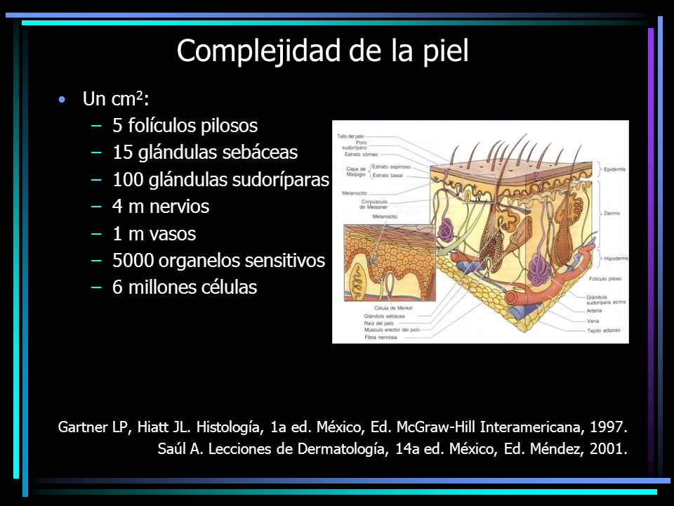 Complejidad de la piel Un cm 2 : –5 folículos pilosos –15 glándulas sebáceas –100 glándulas sudoríparas –4 m nervios –1 m vasos –5000 organelos sensit