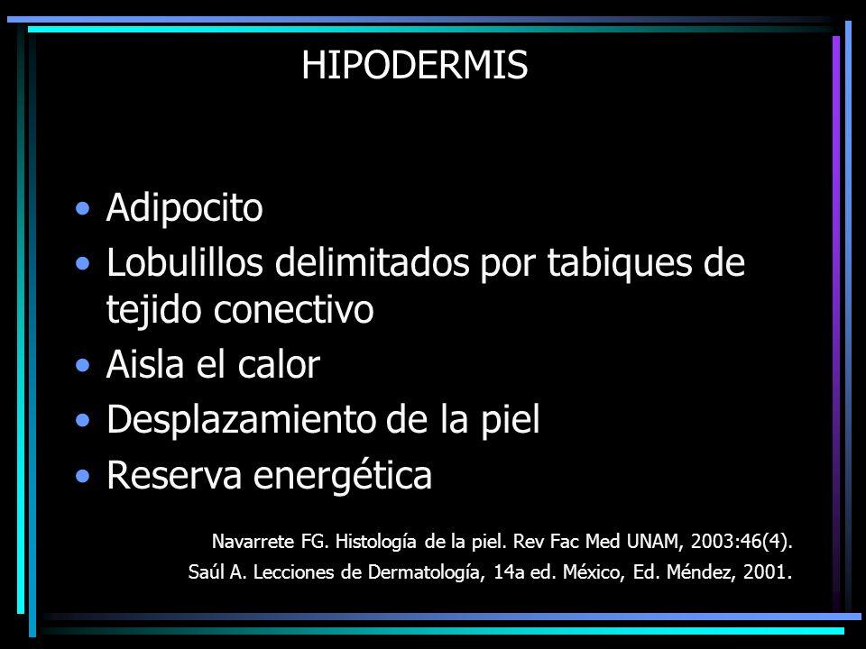 HIPODERMIS Adipocito Lobulillos delimitados por tabiques de tejido conectivo Aisla el calor Desplazamiento de la piel Reserva energética Navarrete FG.
