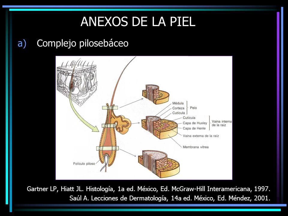 ANEXOS DE LA PIEL a)Complejo pilosebáceo Gartner LP, Hiatt JL. Histología, 1a ed. México, Ed. McGraw-Hill Interamericana, 1997. Saúl A. Lecciones de D