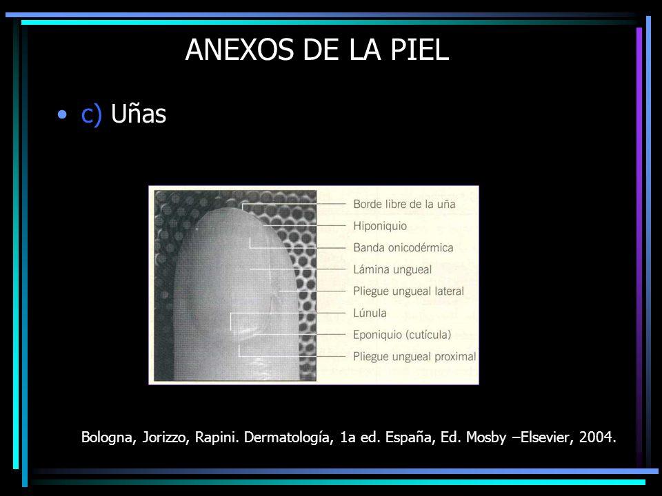 ANEXOS DE LA PIEL c) Uñas Bologna, Jorizzo, Rapini. Dermatología, 1a ed. España, Ed. Mosby –Elsevier, 2004.