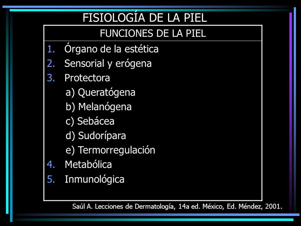 FISIOLOGÍA DE LA PIEL Saúl A. Lecciones de Dermatología, 14a ed. México, Ed. Méndez, 2001. FUNCIONES DE LA PIEL 1.Órgano de la estética 2.Sensorial y