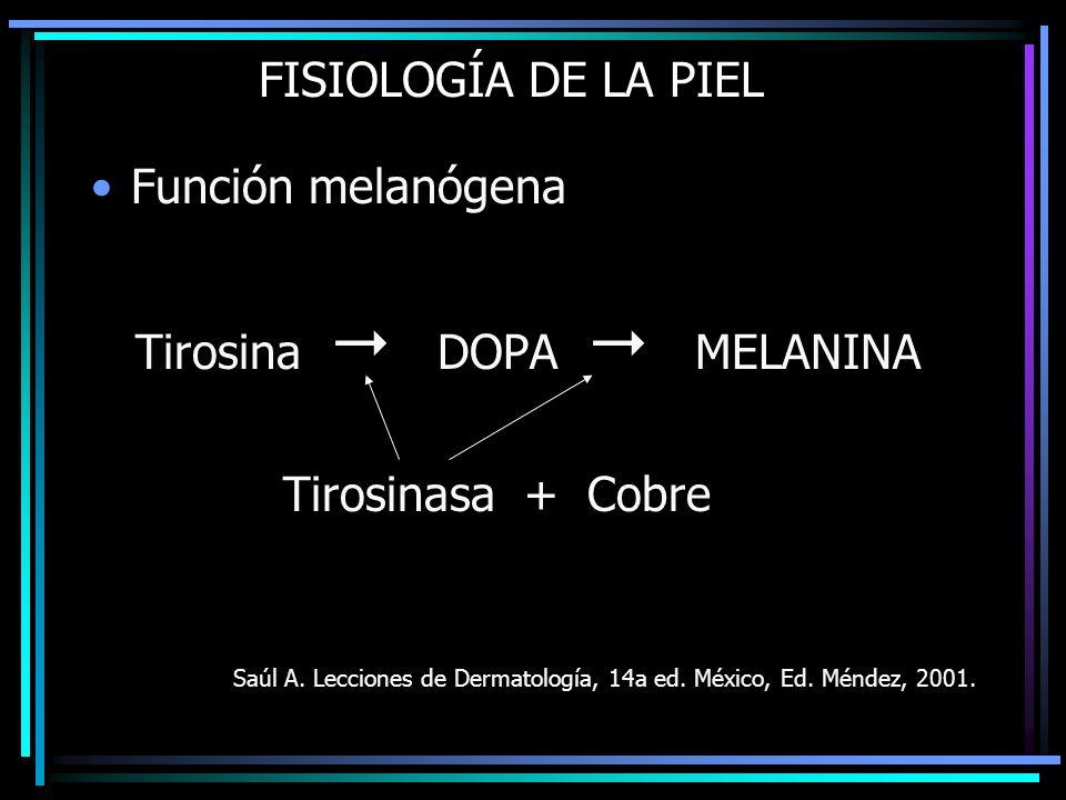 FISIOLOGÍA DE LA PIEL Función melanógena Tirosina DOPA MELANINA Tirosinasa + Cobre Saúl A. Lecciones de Dermatología, 14a ed. México, Ed. Méndez, 2001