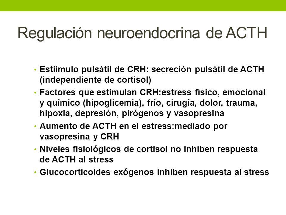 Regulación neuroendocrina de ACTH Estiímulo pulsátil de CRH: secreción pulsátil de ACTH (independiente de cortisol) Factores que estimulan CRH:estress