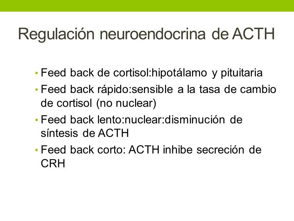 Regulación neuroendocrina de ACTH Feed back de cortisol:hipotálamo y pituitaria Feed back rápido:sensible a la tasa de cambio de cortisol (no nuclear)
