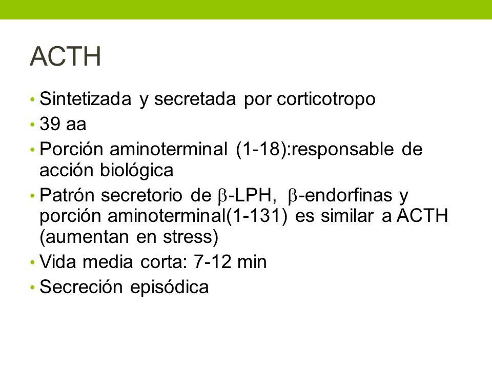 ACTH Sintetizada y secretada por corticotropo 39 aa Porción aminoterminal (1-18):responsable de acción biológica Patrón secretorio de -LPH, -endorfina