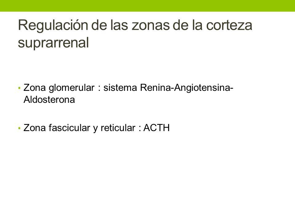 Regulación de las zonas de la corteza suprarrenal Zona glomerular : sistema Renina-Angiotensina- Aldosterona Zona fascicular y reticular : ACTH