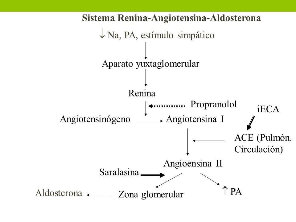 Na, PA, estímulo simpático Aparato yuxtaglomerular Renina AngiotensinógenoAngiotensina I Angioensina II Zona glomerular Aldosterona PA ACE (Pulmón. Ci