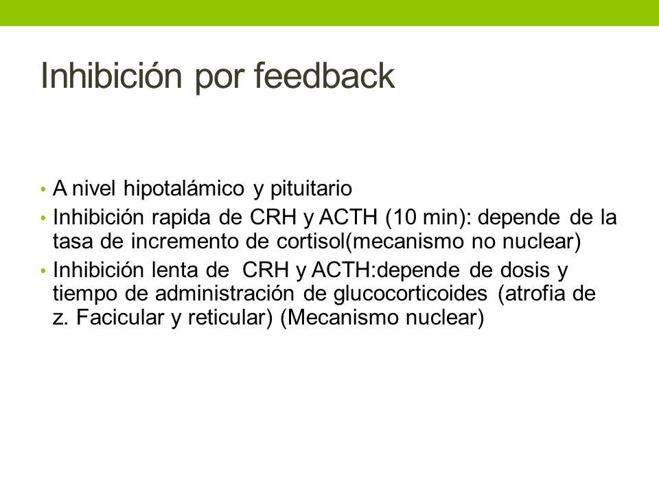 Inhibición por feedback A nivel hipotalámico y pituitario Inhibición rapida de CRH y ACTH (10 min): depende de la tasa de incremento de cortisol(mecan