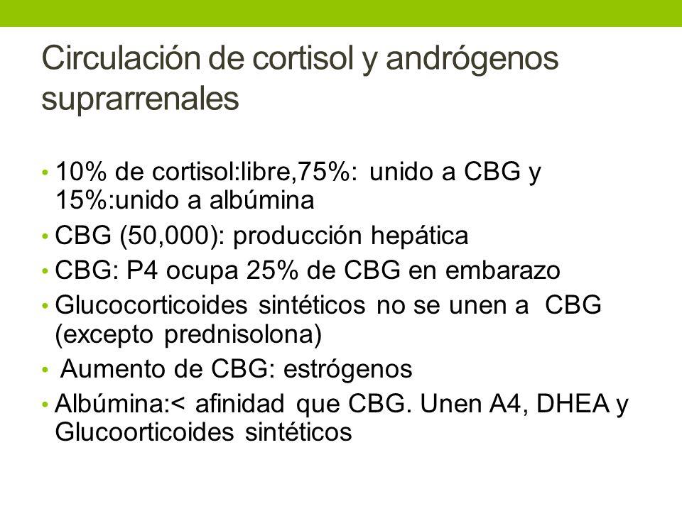Circulación de cortisol y andrógenos suprarrenales 10% de cortisol:libre,75%: unido a CBG y 15%:unido a albúmina CBG (50,000): producción hepática CBG