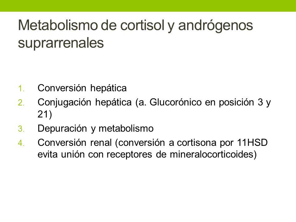 Metabolismo de cortisol y andrógenos suprarrenales 1. Conversión hepática 2. Conjugación hepática (a. Glucorónico en posición 3 y 21) 3. Depuración y