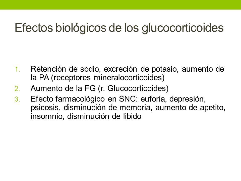 Efectos biológicos de los glucocorticoides 1. Retención de sodio, excreción de potasio, aumento de la PA (receptores mineralocorticoides) 2. Aumento d
