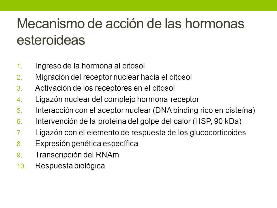 Mecanismo de acción de las hormonas esteroideas 1. Ingreso de la hormona al citosol 2. Migración del receptor nuclear hacia el citosol 3. Activación d