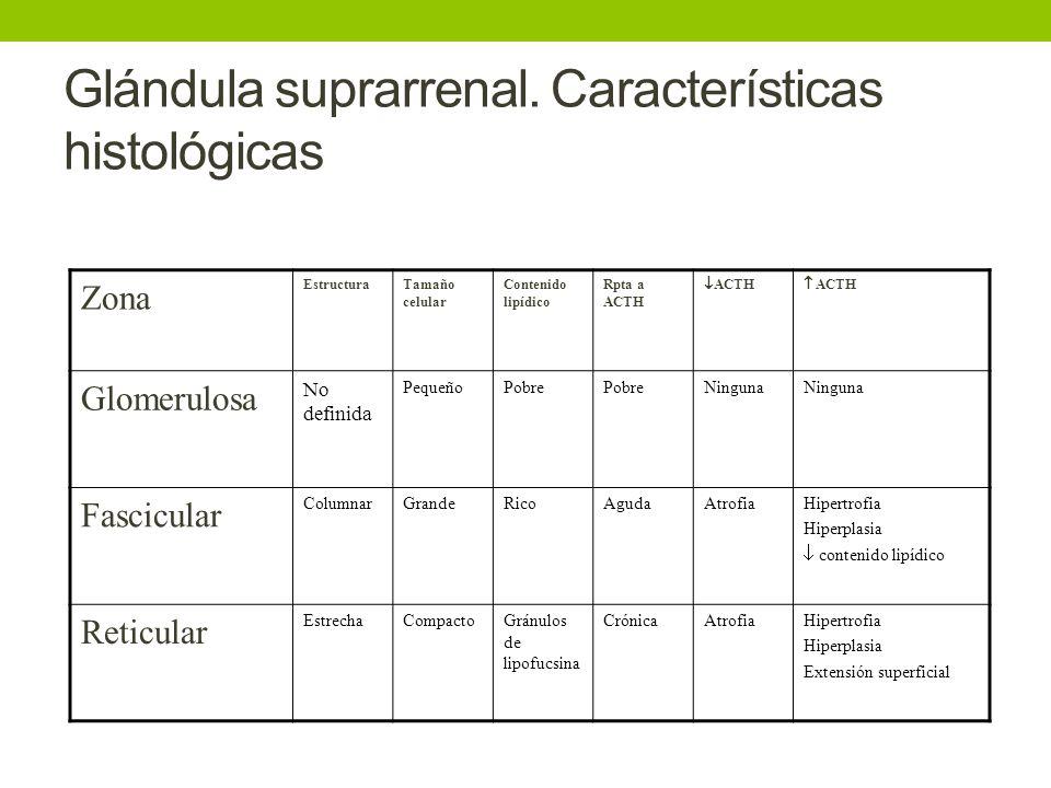 Glándula suprarrenal. Características histológicas Zona EstructuraTamaño celular Contenido lipídico Rpta a ACTH ACTH Glomerulosa No definida PequeñoPo
