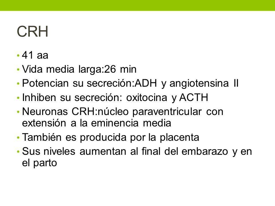 CRH 41 aa Vida media larga:26 min Potencian su secreción:ADH y angiotensina II Inhiben su secreción: oxitocina y ACTH Neuronas CRH:núcleo paraventricu