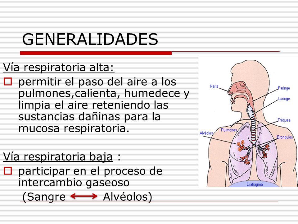 GENERALIDADES Vía respiratoria alta: permitir el paso del aire a los pulmones,calienta, humedece y limpia el aire reteniendo las sustancias dañinas pa