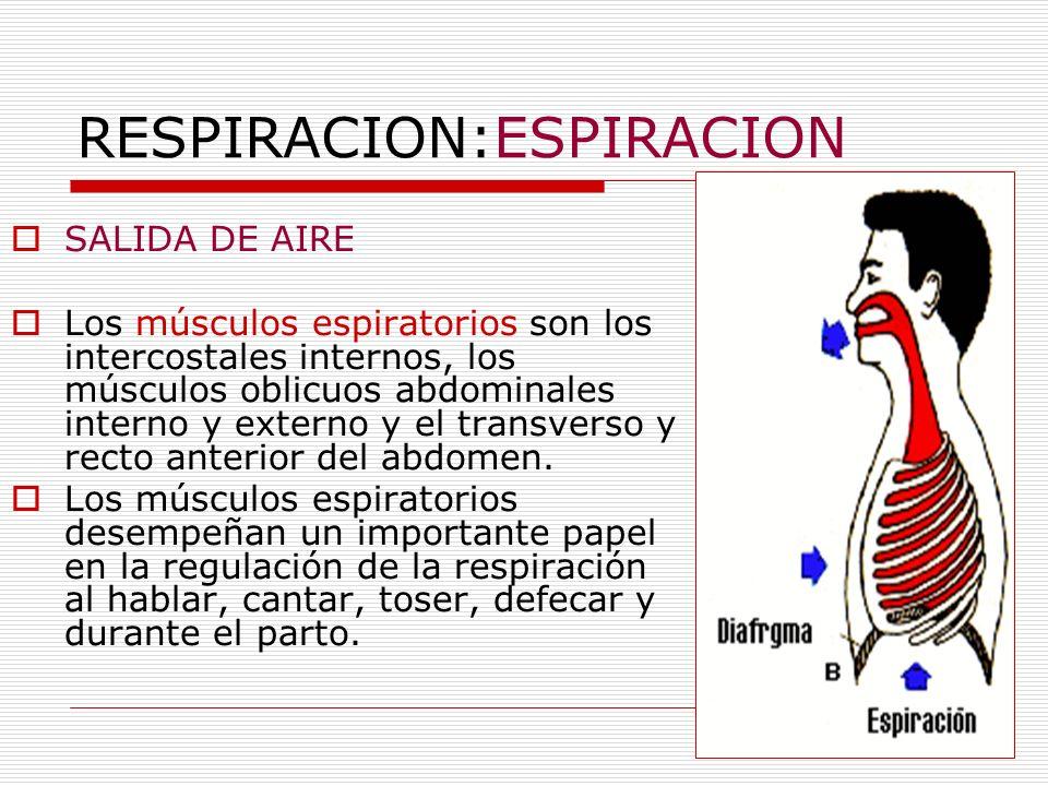 RESPIRACION:ESPIRACION SALIDA DE AIRE Los músculos espiratorios son los intercostales internos, los músculos oblicuos abdominales interno y externo y