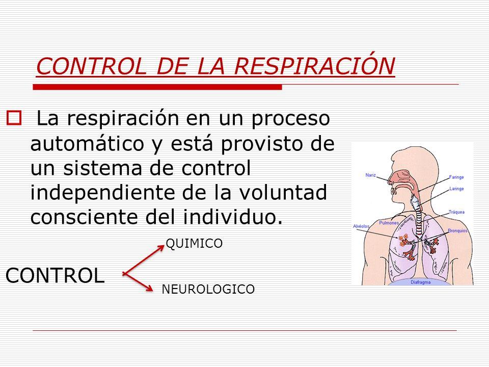 CONTROL DE LA RESPIRACIÓN La respiración en un proceso automático y está provisto de un sistema de control independiente de la voluntad consciente del