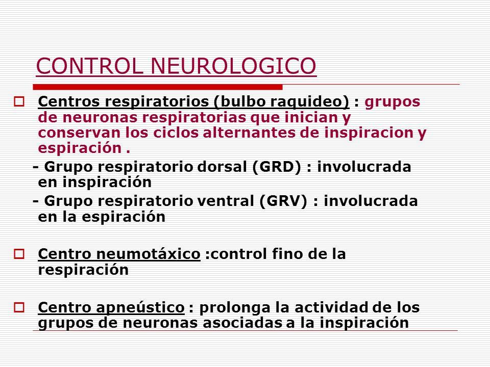 Centros respiratorios (bulbo raquideo) : grupos de neuronas respiratorias que inician y conservan los ciclos alternantes de inspiracion y espiración.