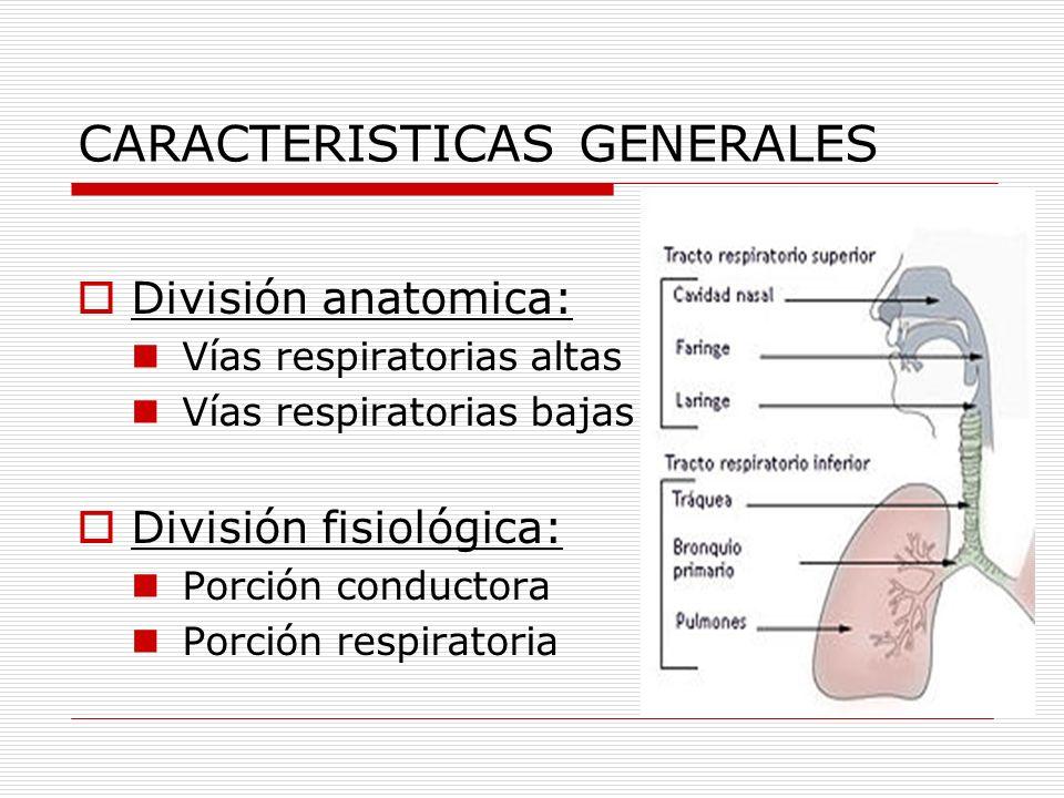 CARACTERISTICAS GENERALES División anatomica: Vías respiratorias altas Vías respiratorias bajas División fisiológica: Porción conductora Porción respi