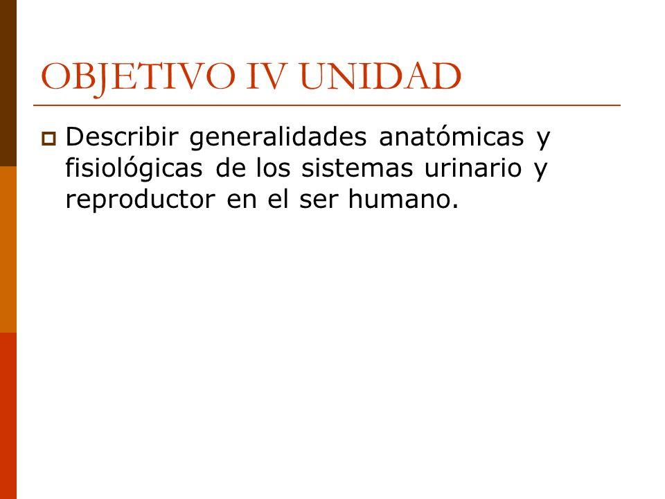 SISTEMA GENITO URINARIO El sistema urinario se compone de: Riñones(2) Uréteres(2) Vejiga(1) Uretra(1) Uretra