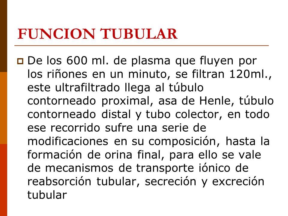 FUNCION TUBULAR De los 600 ml. de plasma que fluyen por los riñones en un minuto, se filtran 120ml., este ultrafiltrado llega al túbulo contorneado pr