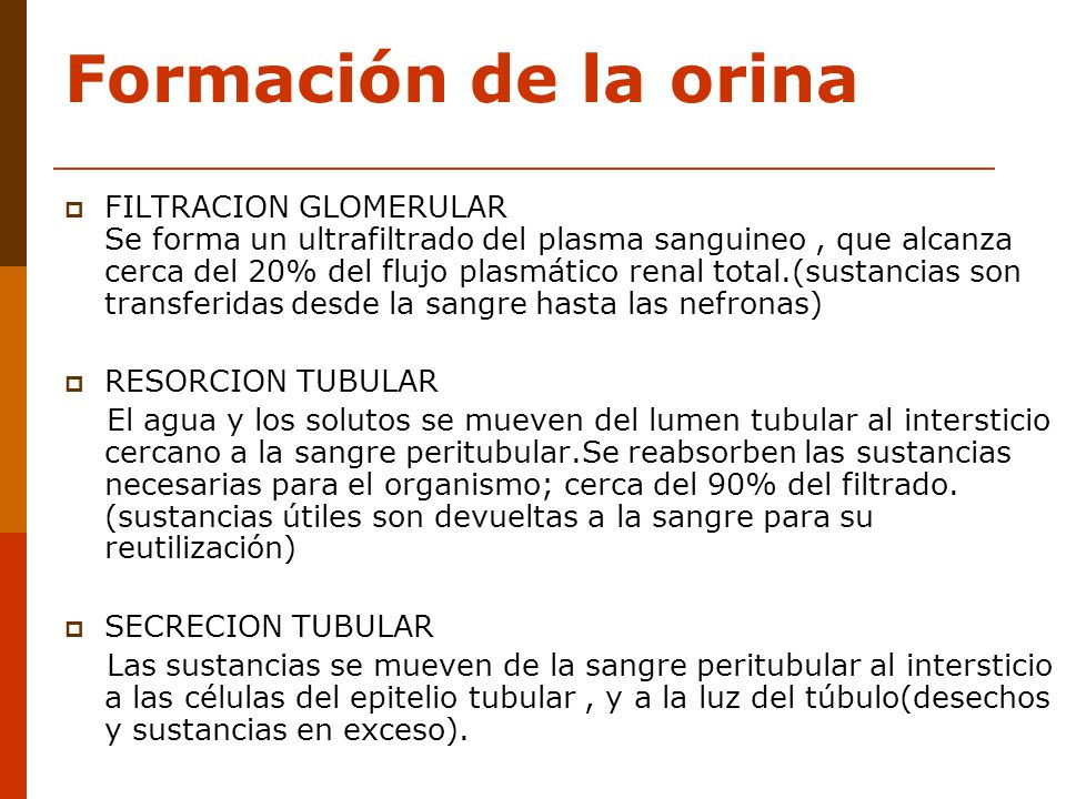 Formación de la orina FILTRACION GLOMERULAR Se forma un ultrafiltrado del plasma sanguineo, que alcanza cerca del 20% del flujo plasmático renal total