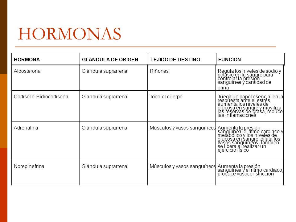 HORMONAS AldosteronaGlándula suprarrenalRiñones Regula los niveles de sodio y potasio en la sangre para controlar la presión sanguínea y cantidad de o