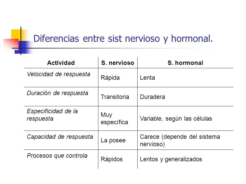 Diferencias entre sist nervioso y hormonal. ActividadS. nerviosoS. hormonal Velocidad de respuesta RápidaLenta Duración de respuesta TransitoriaDurade