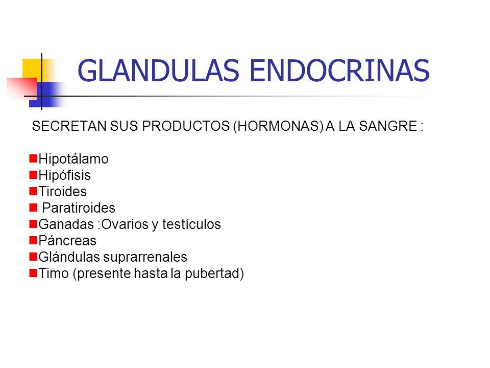 GLANDULAS ENDOCRINAS SECRETAN SUS PRODUCTOS (HORMONAS) A LA SANGRE : Hipotálamo Hipófisis Tiroides Paratiroides Ganadas :Ovarios y testículos Páncreas