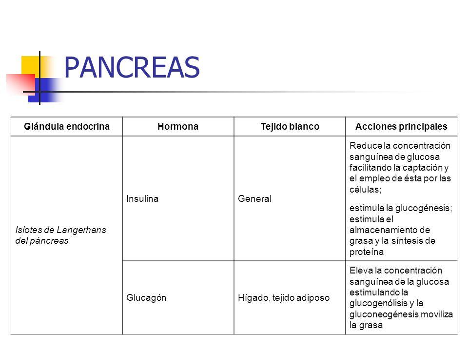Glándula endocrinaHormonaTejido blancoAcciones principales Islotes de Langerhans del páncreas InsulinaGeneral Reduce la concentración sanguínea de glu