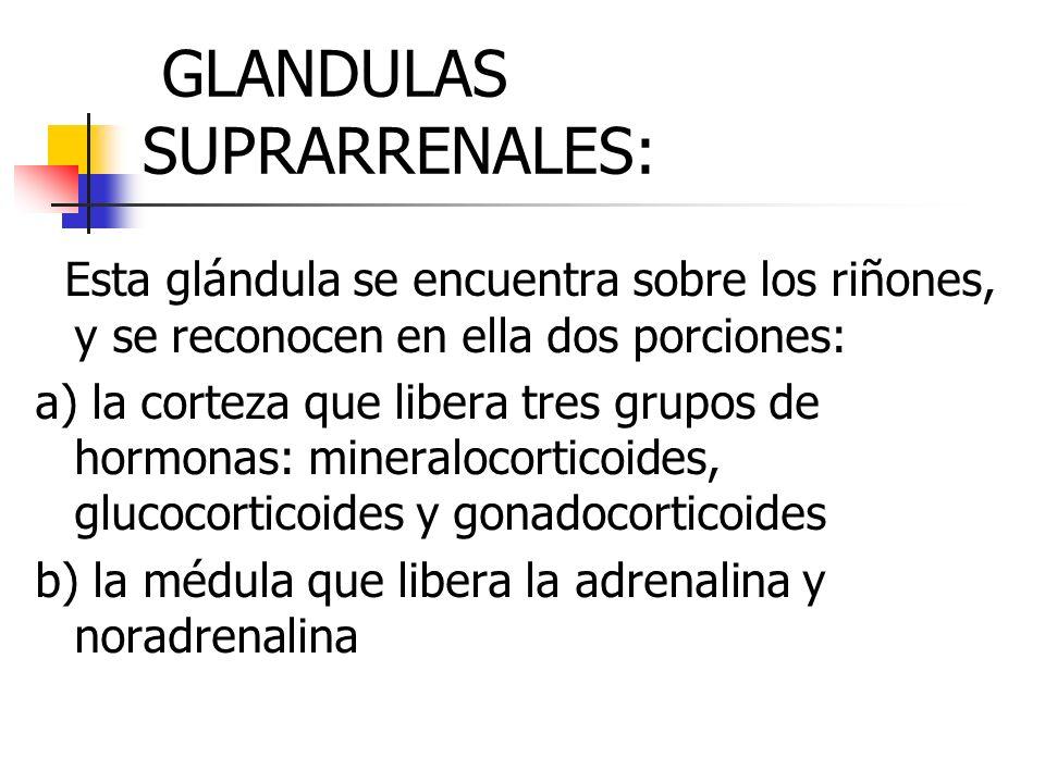 GLANDULAS SUPRARRENALES: Esta glándula se encuentra sobre los riñones, y se reconocen en ella dos porciones: a) la corteza que libera tres grupos de h