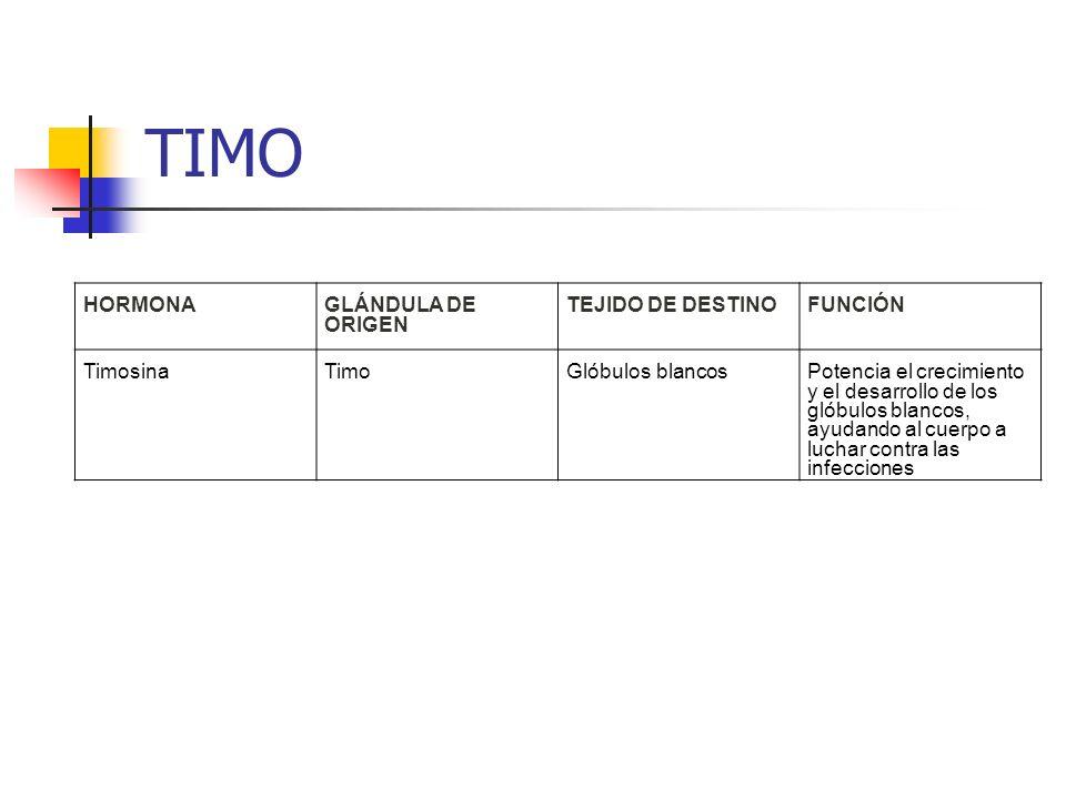 TIMO HORMONA GLÁNDULA DE ORIGEN TEJIDO DE DESTINOFUNCIÓN TimosinaTimoGlóbulos blancos Potencia el crecimiento y el desarrollo de los glóbulos blancos,