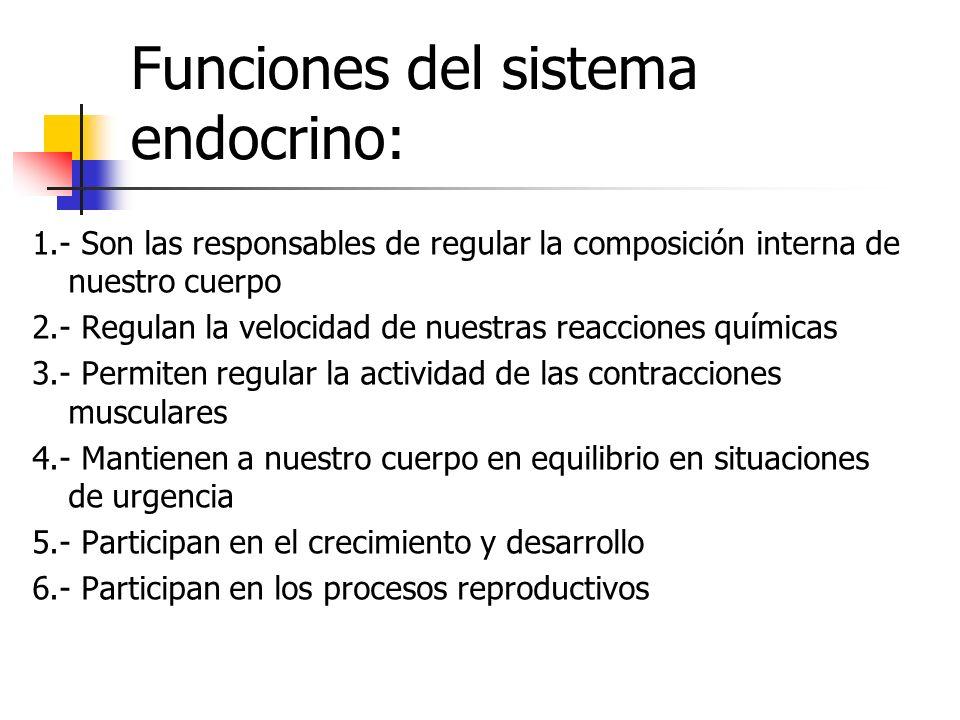 Funciones del sistema endocrino: 1.- Son las responsables de regular la composición interna de nuestro cuerpo 2.- Regulan la velocidad de nuestras rea