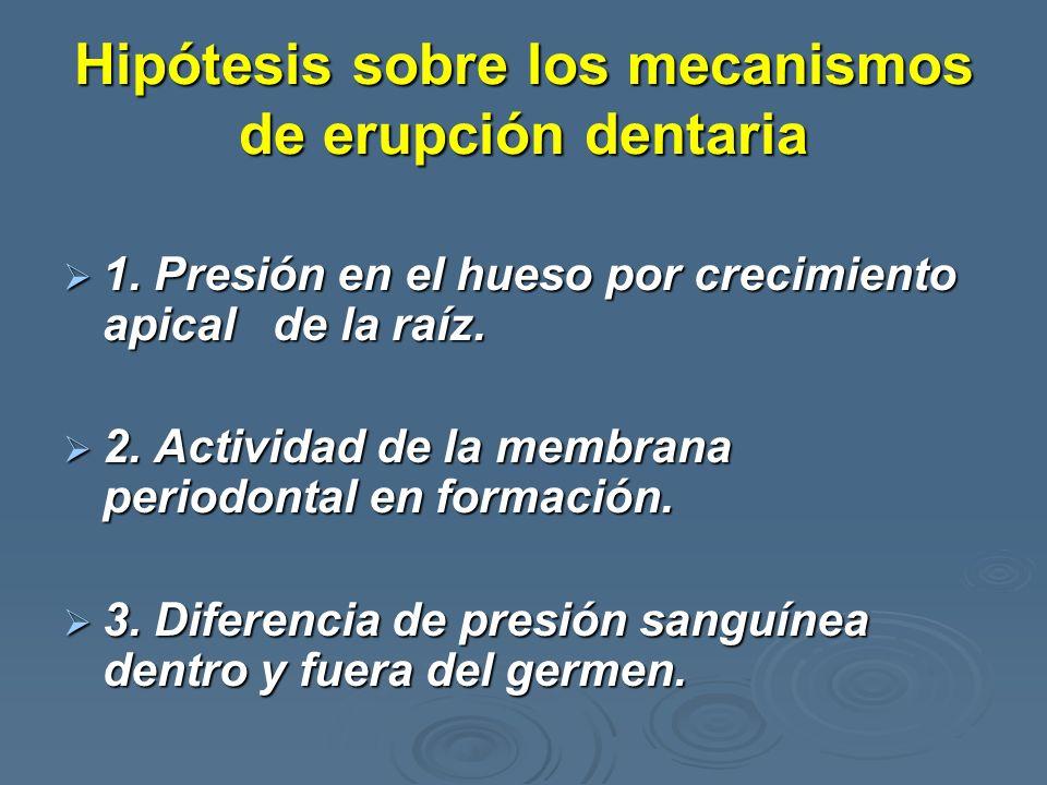 Hipótesis sobre los mecanismos de erupción dentaria 1. Presión en el hueso por crecimiento apical de la raíz. 1. Presión en el hueso por crecimiento a