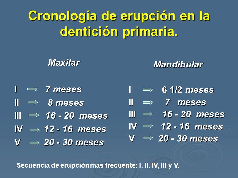 Cronología de erupción en la dentición primaria. Maxilar I 7 meses II 8 meses III 16 - 20 meses IV 12 - 16 meses V 20 - 30 meses Mandibular I 6 1/2 me