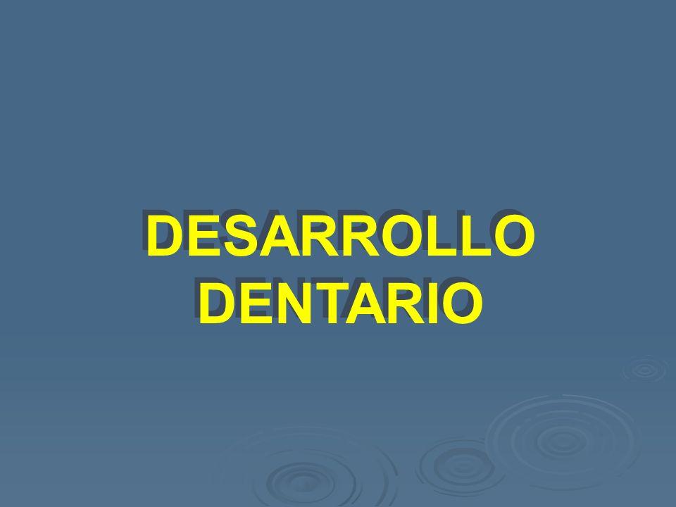 DESARROLLO DENTARIO DESARROLLO DENTARIO