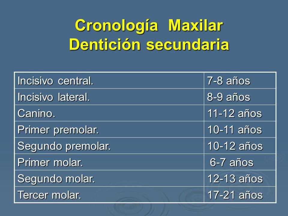 Cronología Maxilar Dentición secundaria Incisivo central. 7-8 años Incisivo lateral. 8-9 años Canino. 11-12 años Primer premolar. 10-11 años Segundo p