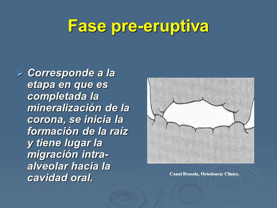 Fase pre-eruptiva Corresponde a la etapa en que es completada la mineralización de la corona, se inicia la formación de la raíz y tiene lugar la migra